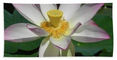 Beach Towel featuring the photograph Lotus Flower by Chrisann Ellis