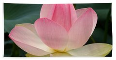 Lotus In Bloom Beach Towel