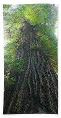 Low-angle View Of Redwood Tree Beach Towel