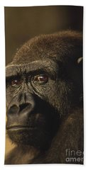 Lowland Gorilla Beach Sheet by Frans Lanting MINT Images