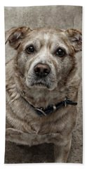 Beach Towel featuring the photograph Loyalty  by Aaron Berg
