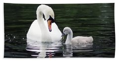 Lunchtime For Swan And Cygnet Beach Towel