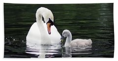 Beach Towel featuring the photograph Lunchtime For Swan And Cygnet by Rona Black
