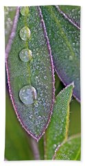 Lupin Leaves And Waterdrops Beach Towel