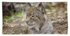 Lynx In Close Up Beach Towel