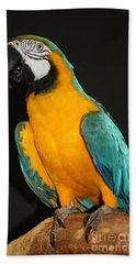 Macaw Hanging Out Beach Sheet by John Telfer