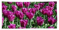 Beach Sheet featuring the photograph Magenta Tulips by Allen Beatty