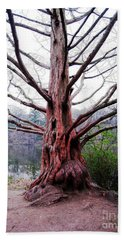 Beach Towel featuring the photograph Magic Tree by Nina Silver