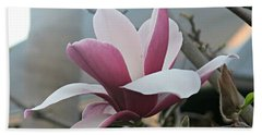 Magnificent Magnolia Blossom Beach Towel