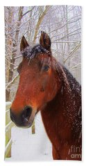 Majestic Morgan Horse Beach Towel