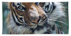 Malayan Tiger Beach Sheet