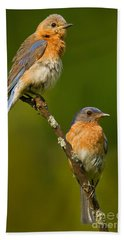 Beach Towel featuring the photograph Male And Female Bluebirds by Jerry Fornarotto