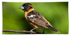 Male Black Headed Grosbeak In A Tree Beach Sheet
