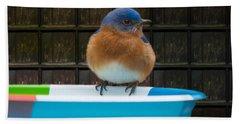 Beach Towel featuring the photograph Male Eastern Bluebird by Robert L Jackson