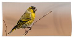 Male Eurasian Siskin Beach Towel
