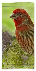 Beach Towel featuring the photograph Male Finch In Hydrangesa by Debbie Portwood