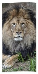 Male Lion Portrait Beach Sheet