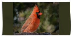 Male Northern Cardinal 3 Beach Sheet by Kenneth Cole