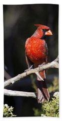 Male Northern Cardinal Beach Towel by Gary Langley