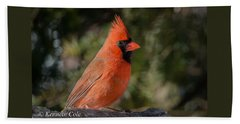 Male Northern Cardinal Beach Sheet by Kenneth Cole