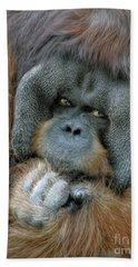Beach Towel featuring the photograph Male Orangutan  by Savannah Gibbs