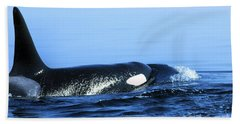 Beach Towel featuring the photograph Male Orca Off The San Juan Islands Washington 1986 by California Views Mr Pat Hathaway Archives
