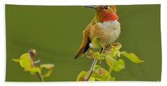 Male Rufous Hummingbird Beach Towel