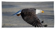 Male Wild Bald Eagle Ready To Land Beach Sheet