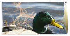 Beach Towel featuring the photograph Mallard Anas Platyrhynchos by Neal Eslinger