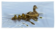 Mallard And Chicks  Beach Towel