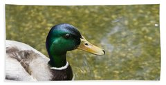 Beach Sheet featuring the photograph Mallard Duck Closeup by David Millenheft