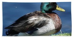 Beach Sheet featuring the photograph Mallard Duck by Kerri Mortenson