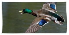 Beach Towel featuring the photograph Mallard In Flight by Jerry Gammon