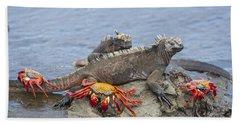Marine Iguana Pair And Sally Lightfoot Beach Towel