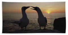 Masked Booby Couple Courting Galapagos Beach Sheet by Konrad Wothe