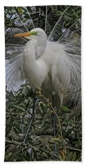 Mating Plumage Beach Towel by Deborah Benoit