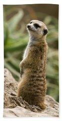 Meerkat Mongoose Portrait Beach Towel by David Millenheft