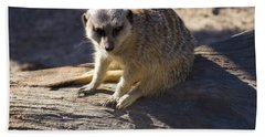 Meerkat Resting On A Rock Beach Towel