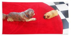 Dog And Puppy Pet Photography Lhasa Apso Shih Tzu Pomeranian   Beach Sheet