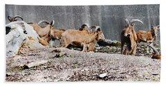Meeting Of Barbary Sheep Beach Sheet