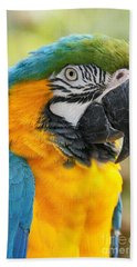 Mele E Manono Ia Ea Macao Tropical Birds Of Hawaii Beach Towel