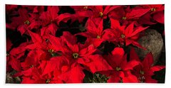 Merry Scarlet Poinsettias Christmas Star Beach Sheet
