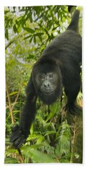 Beach Towel featuring the photograph Mexican Black Howler Monkey Belize by Kevin Schafer