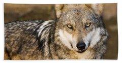 Mexican Gray Wolf, Canis Lupus Baileyi Beach Towel