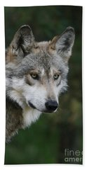 Mexican Wolf #4 Beach Sheet