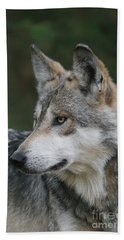 Mexican Wolf #6 Beach Towel by Judy Whitton