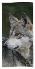 Mexican Wolf #6 Beach Sheet by Judy Whitton