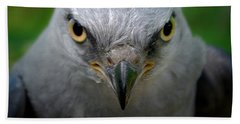 Mississippi Kite Stare Beach Towel