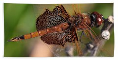 Mocha And Cream Dragonfly Profile Beach Towel by Kenny Glotfelty