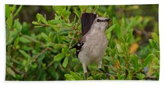 Mockingbird In Tree Beach Sheet